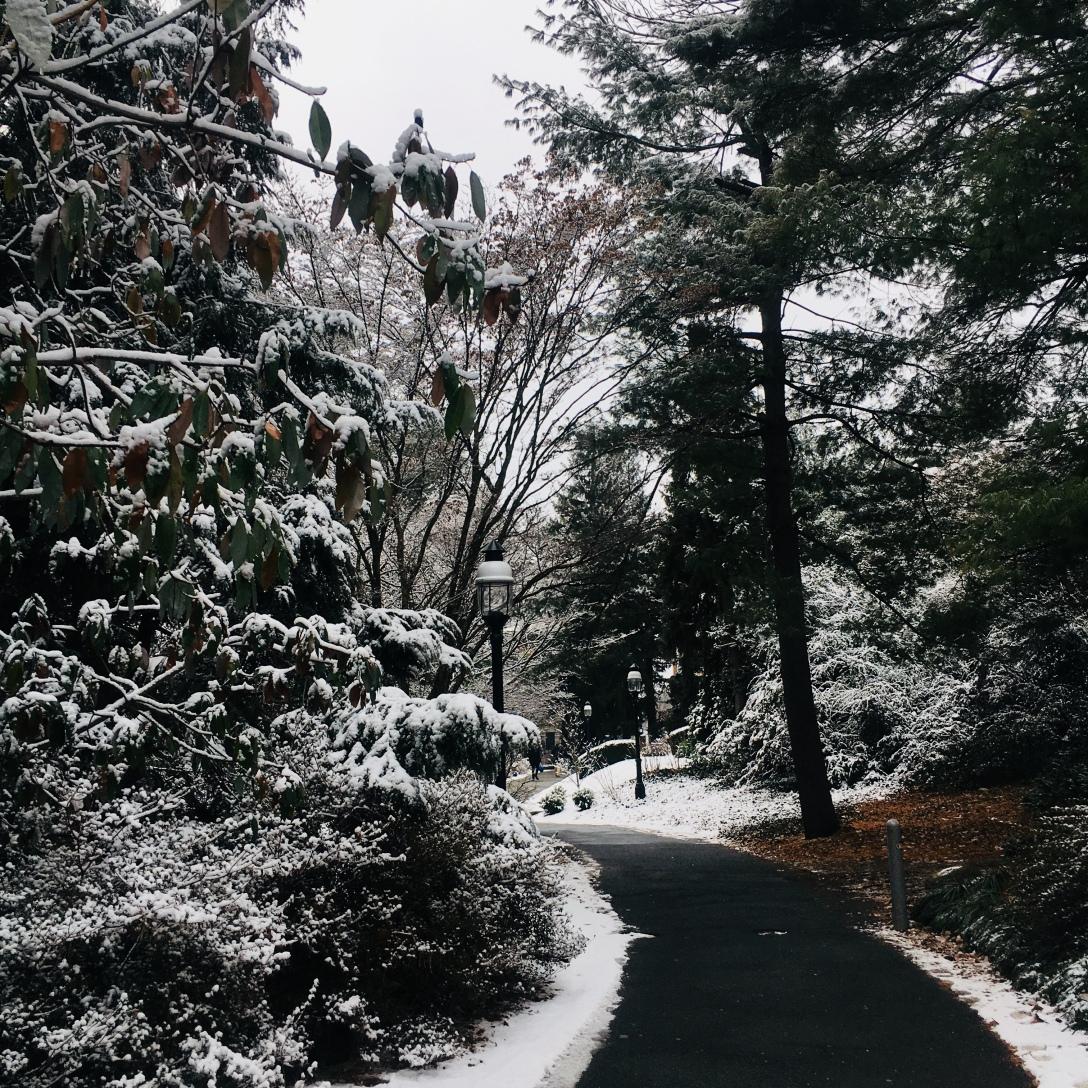 プリンストン大学の雪