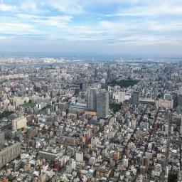 日本に帰ってきて改めて考えたブログを始めた理由と『ブラウンの熊たち』